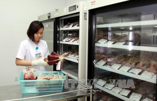 Các túi hồng cầu trước khi đưa vào đông lạnh tại ngân hàng máu BV Truyền máu-Huyết học TPHCM.