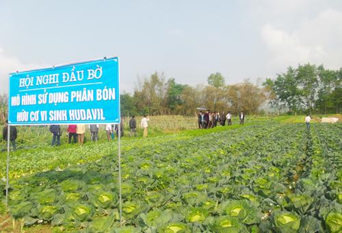 Các đại biểu tham gia Hội nghị đầu bờ thăm quan thực tế mô hình sử dụng phân bón hữu cơ Hudavil trồng rau màu