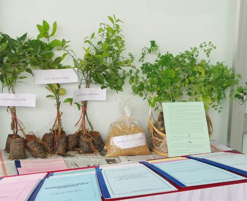 Ngành KH&CN đã triển khai nhiều mô hình ứng dụng những giống cây trồng mới có giá trị kinh tế cao tại địa phương.