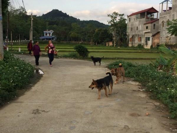 Tình trạng thả rông chó vẫn diễn ra tại một số phường, xã trên địa bàn Thành phố.