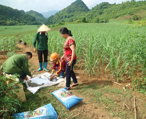 Cán bộ kỹ thuật hướng dẫn người dân cách sử dụng phân hữu cơ hudavil sử dụng cho cây mía