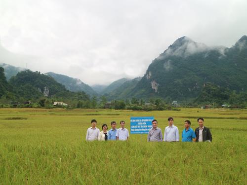Hội nghị đầu bờ mô hình sản xuất lúa nếp hương Bảo Lạc