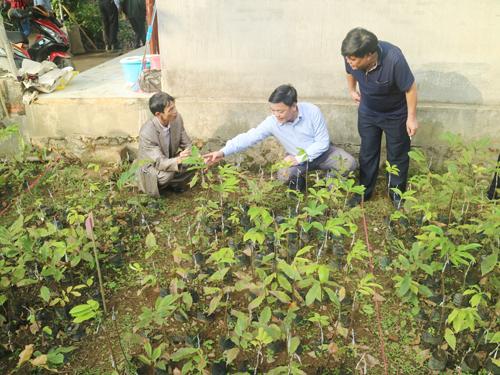 """Khảo sát tiến độ thực hiện đề tài """"Nghiên cứu khai thác và phát triển nguồn gen cây Dẻ Trùng Khánh."""