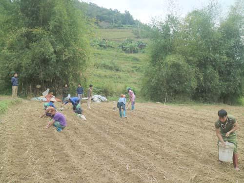 Cán bộ kỹ thuật đang hướng dẫn bà con kỹ thuật trồng tại xóm Pác Riệu, xã Thượng Hà, huyện Bảo Lạc