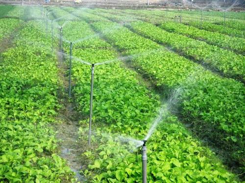 Tái sử dụng nước thải cho mục đích tưới nông nghiệp